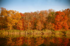 Bright colors of autumn in the park by the lake with ducks Royalty Free Stock Photo