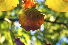 Bright colors of autumn stock photography