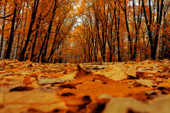 Bright colors autumn trees. Autumn landscape. Royalty Free Stock Image