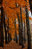 Bright colors autumn trees. Autumn landscape. Stock Photo