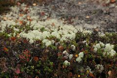 Bright colors of autumn in the tundra stock photography