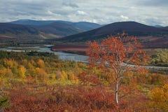 Bright colors of autumn in the valley. Sob River. Polar Urals. Russia stock image
