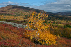 Bright colors of autumn in the valley. Sob River. Polar Urals. Russia royalty free stock image