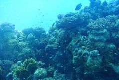 Bright colors of corals. Eilat. Israel royalty free stock photo