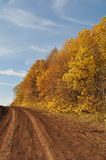 Bright colors, the path with trees. Road, beautiful scenery, nature, dirt track, deciduous plants in the autumn royalty free stock photo