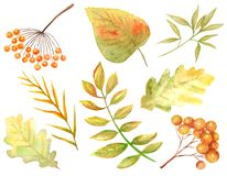 Bright colors set of watercolor autumn leaves. Wild grapes, elm, linden, oak, rowan, pear isolated on white background royalty free illustration