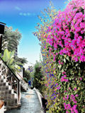 Bright colors on the wall of the hotel and the path leading to the sea. Landscape. Bright colors on the wall of the hotel and the path leading to the sea Stock Images