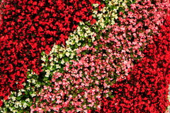 Bright-coloured Flower Bed(2). Bright-coloured Flower Bed in Autum (2 stock photos