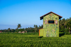 Bright coloured house on a rice terrace Royalty Free Stock Images