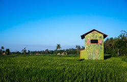 Bright coloured house on a rice terrace. Bali, Indonesia royalty free stock photo