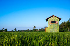 Bright coloured house on a rice terrace Stock Photo