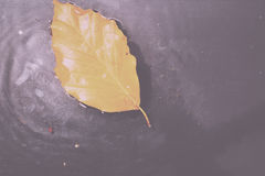 Bright colourful autumn leaf floating in water Vintage Retro Fil Stock Image