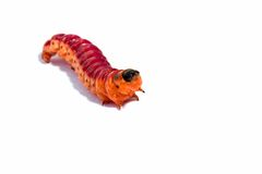 Bright colourful caterpillar on a white background Stock Image