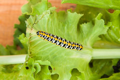 Bright colourful worm Stock Image