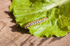 Bright colourful worm Stock Photos