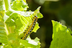 Bright colourful worm Stock Images