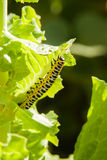 Bright colourful worm Royalty Free Stock Photos