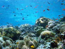 A bright coral reef teems with life. Royalty Free Stock Image