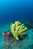 Bright coral underwater in Sipadan Stock Photo