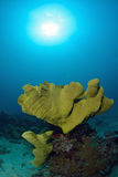 Bright coral underwater in Sipadan Stock Images