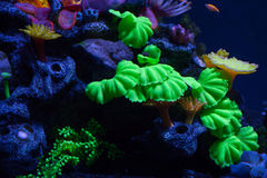 Bright corals on the bottom. Under the water Stock Photo