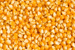 Bright Corn Kernels Arranged Royalty Free Stock Images