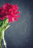 Bright crimson peony flowers Stock Images