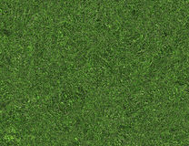 Bright curled twisted green grass texture Stock Image