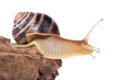 Bright cute snail Stock Image