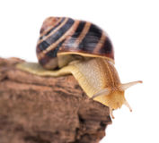 Bright cute snail Stock Photography