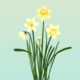 Bright Daffodils Stock Image