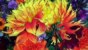 Bright Dahlia bouquet Royalty Free Stock Image