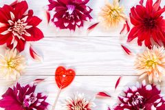 Image with dahlias. Bright dahlias on a wooden background. Copy and paste Royalty Free Stock Photography