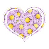 Bright daisies in the form of a heart. Purple chamomile flowers in the form of heart on a white background Stock Image
