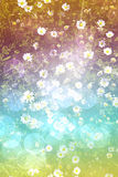 Bright daisy field background Royalty Free Stock Images
