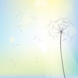 Bright dandelion design. Vector art Royalty Free Stock Photo