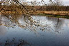 Oak branches over the river. Royalty Free Stock Images