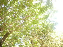 Bright day and trees Royalty Free Stock Image