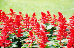 Bright decorative red flovers Stock Images