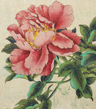 Bright and delicate peony Royalty Free Stock Photo