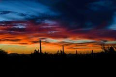 Beautiful Arizona desert sunset with silhouettes stock photography