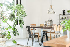 Bright dining room with table. Chairs, bookshelf and green plant stock photos