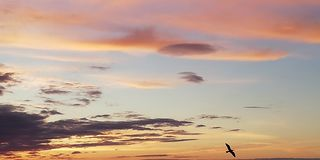 Bright, disturbing, colored background. Silhouette of a bird on the background of a sunset cloudy sky. Stunning scenic backdrop. Multicolored clouds in the stock photos