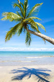 Bright Empty Tropical Beach with Curving Palm Tree Royalty Free Stock Photo
