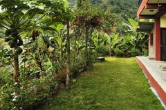 A bright even green lawn in front of the house in the tropics, s. Urrounded by exotic plants and flowers. With papaya and bananna trees royalty free stock photos