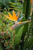 Bright exotic flower stock photo
