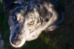 Bright Eyed Unique Looking Dog Canine Looks at Camera Royalty Free Stock Photo