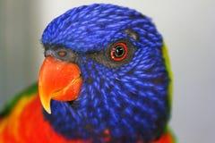 Bright eyes Stock Photos