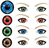 Bright eyes vector. Bright iris and lenses of the eyeball vector Royalty Free Stock Photos