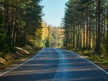 Bright fall colors by the autumn road in Finland. royalty free stock images